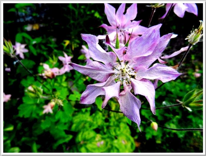 Les fleurs du jardin suite 2014