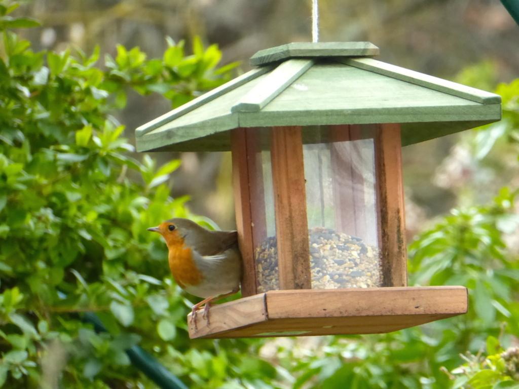 Tous les oiseaux de mon blog!