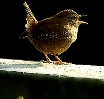 Tubes oiseaux création perso 2