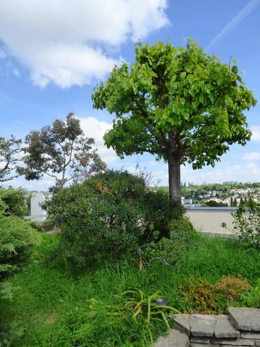 Les arbres de ma terrasse (2)