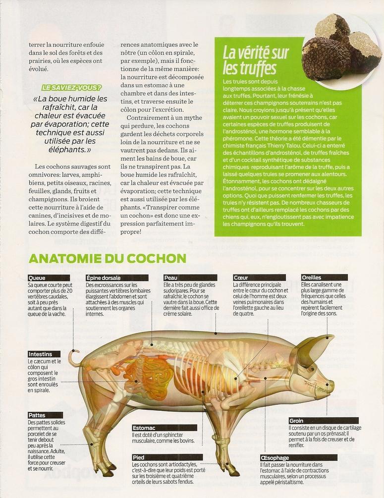 Mammifères 2:  Les cochons (2 pages)