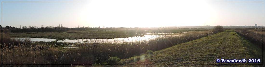 Port du Rocher et près salés est - La Teste de Buch - Février 2016 - 9/12