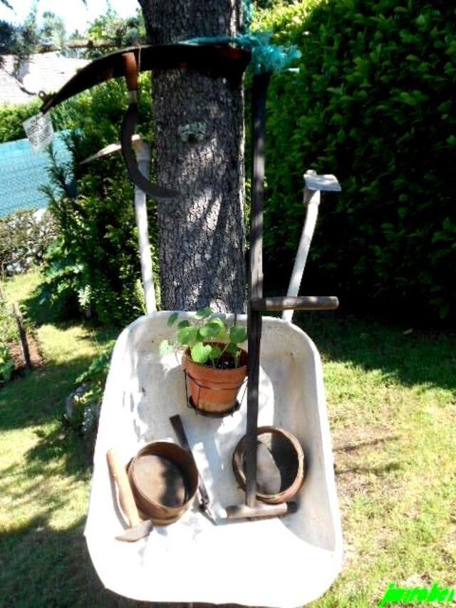 Au jardin ,dites 33 …..avec ses hampes florales