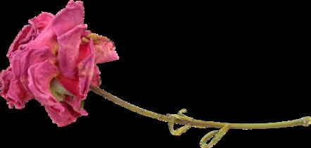 Tubes : Automne/fleur/feuille