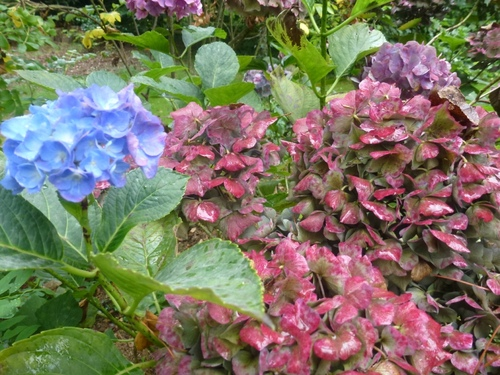 Octobre dans mon jardin