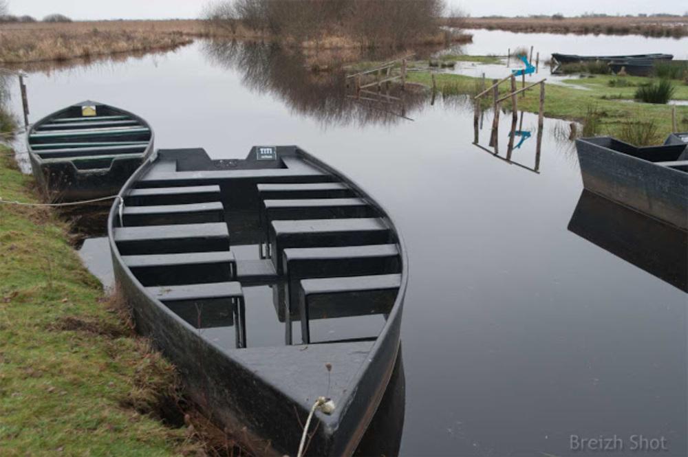 Brière  Les grandes barques utilisées pour visiter le marais durant la saison touristique sont amarrées le long des canaux .