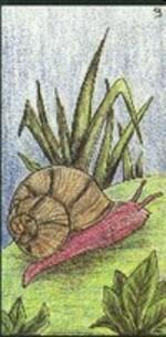 09 - l'escargot