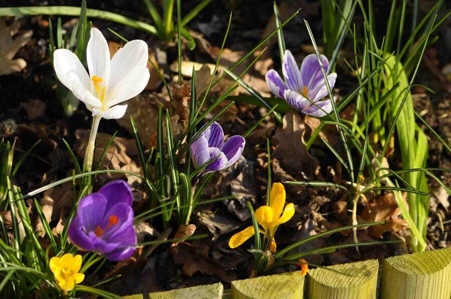 « Mini jardin de printemps »
