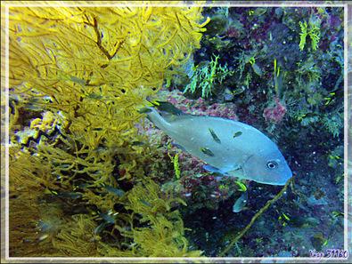 Photos sous-marines présentées en vrac - Nosy Tsarabanjina - Archipel des Mitsio - Madagascar