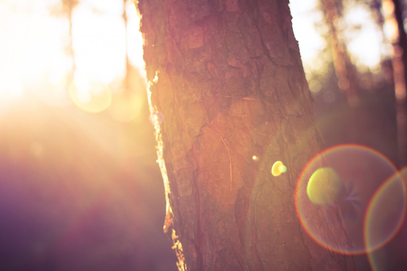 Free image: Tree in Morning Sunlights