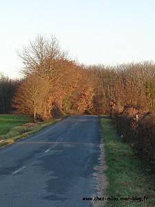 forêt janvier 201108