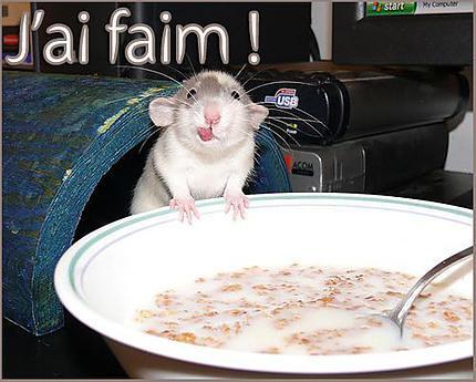 """Résultat de recherche d'images pour """"gif souris et tarte"""""""