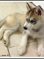 Lara (2 mois)