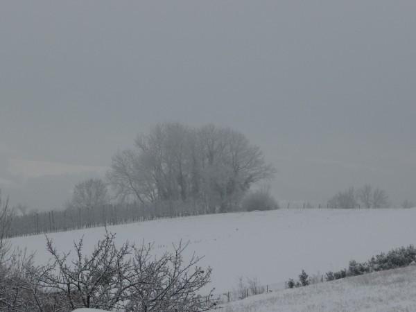 neige janvier 2010 (15)