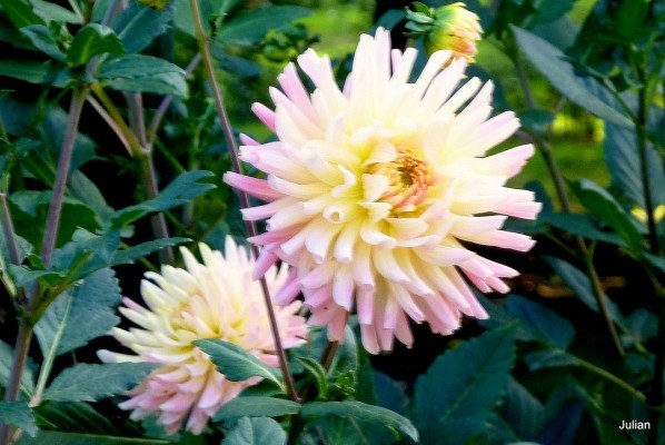 b01---Belle-fleur.JPG