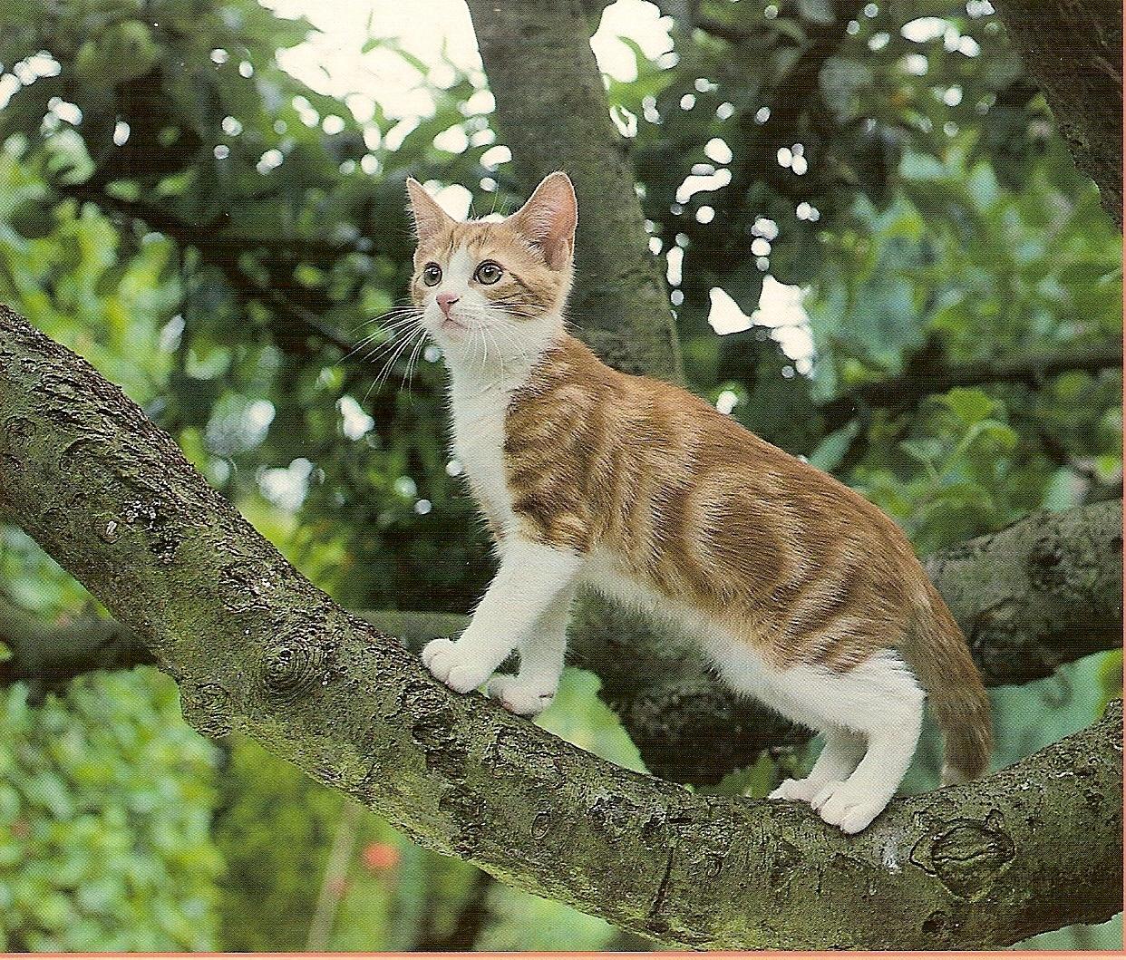 grimper aux arbres bienvenue dans le monde de citycat. Black Bedroom Furniture Sets. Home Design Ideas