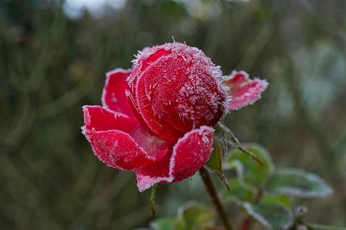 Les Saints de Glace : 11, 12 et 13 mai | Accès SAP Comment anticiper pour  protéger votre jardin ?