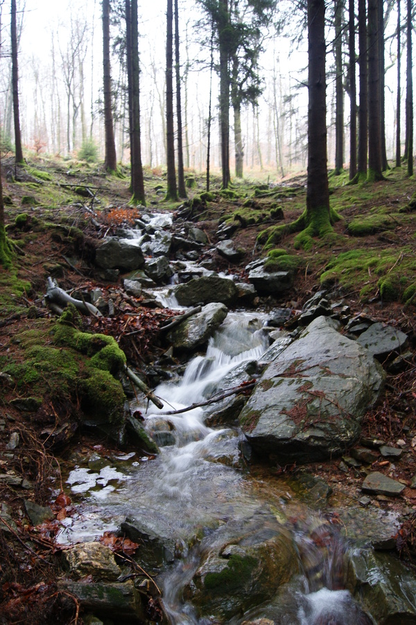 Ardennes-vallée de Morhon