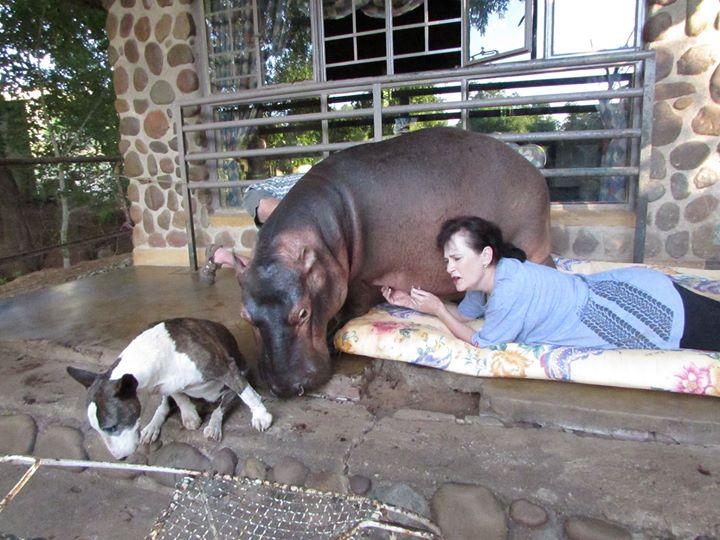 20/2/20 : Belles histoires d'animaux -