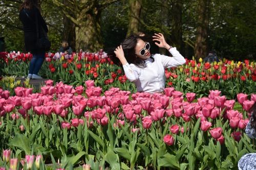 Pays-Bas, Au pays des tulipes - avril 2019
