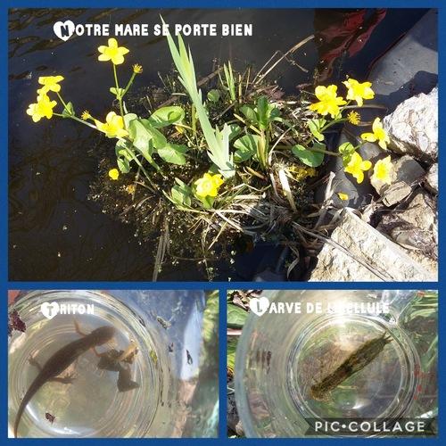 Notre jardin et notre mare se portent bien...