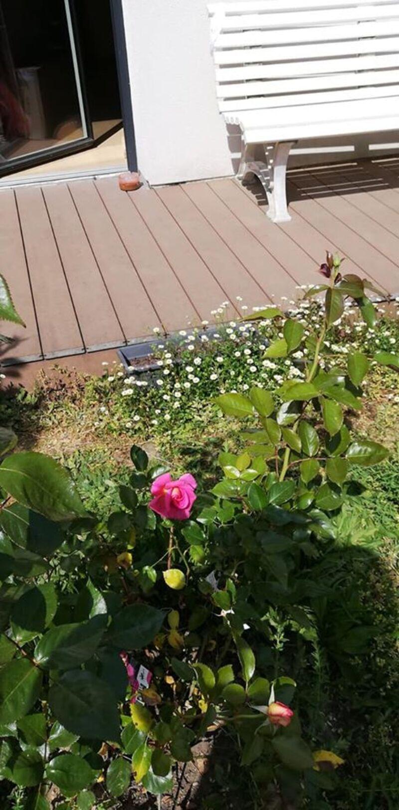 petites fleurs d'avril dans le jardinet de maman