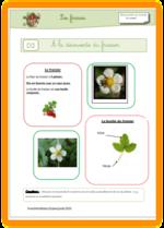 Jardin et germination