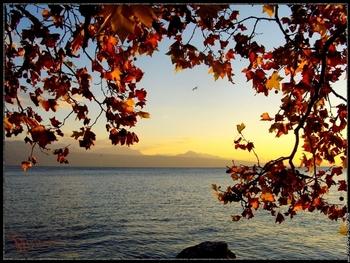 lac-leman-soleil-couchant-sur-les-feuilles