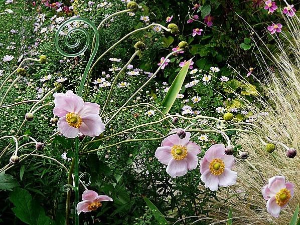 Anemones-roses-25-9-2011-004.jpg