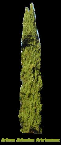 Arbres Arbustes Arbrisseaux