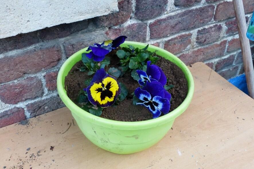 Doucement les fleurs éclosent