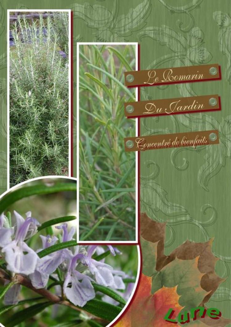 Juste 4 Plantes Médicinales....