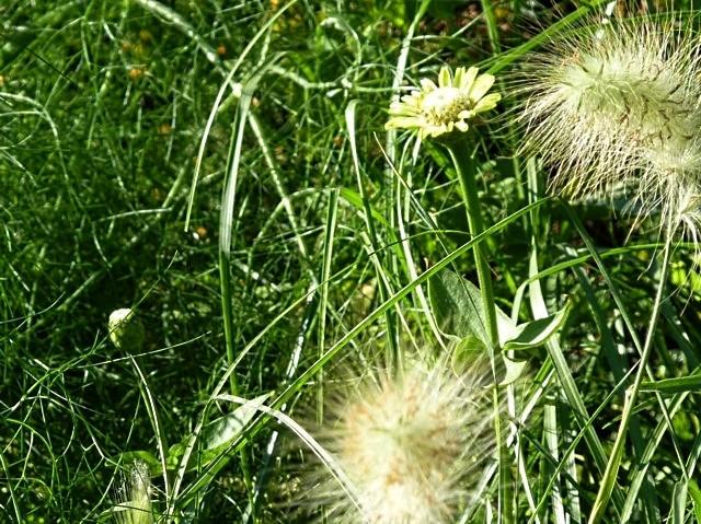 Parcs et jardins de Metz 20 mp1357 2010