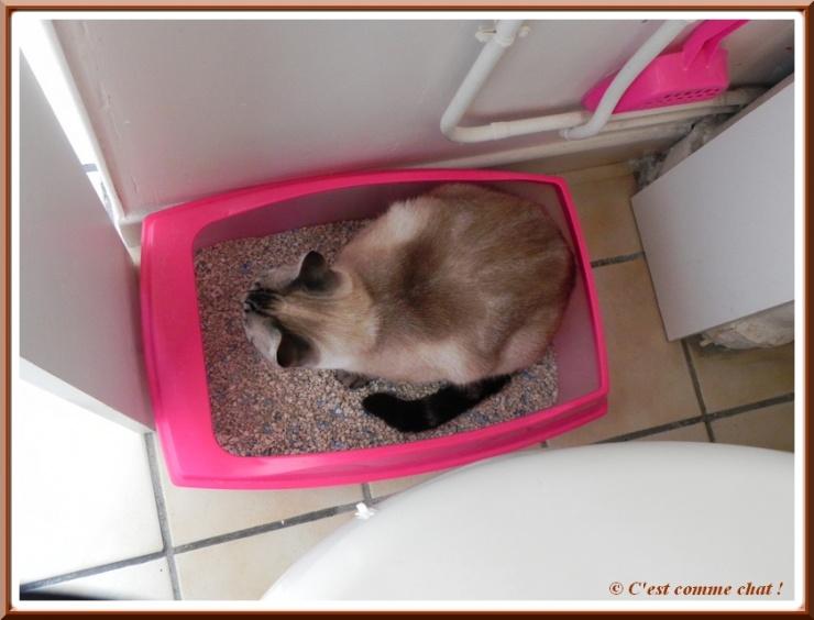 Une litière confortable