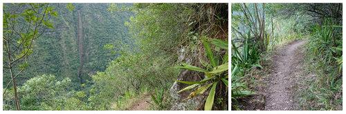 Le Sentier de la Petite Ravine (RANDONNÉE)