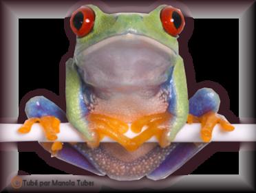 Tube grenouilles / Crapauds 2951