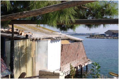 Refuge vandalisé Pattes de velours Sète 34