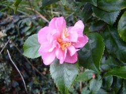 Décembre dans mon jardin