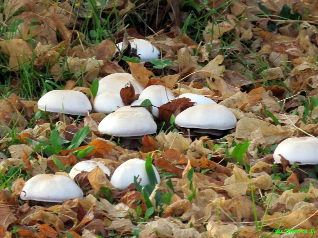 champignons au jardin
