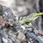 Sur un rocher du côté de Sainte-Anne - 4 - Photo : Edgar