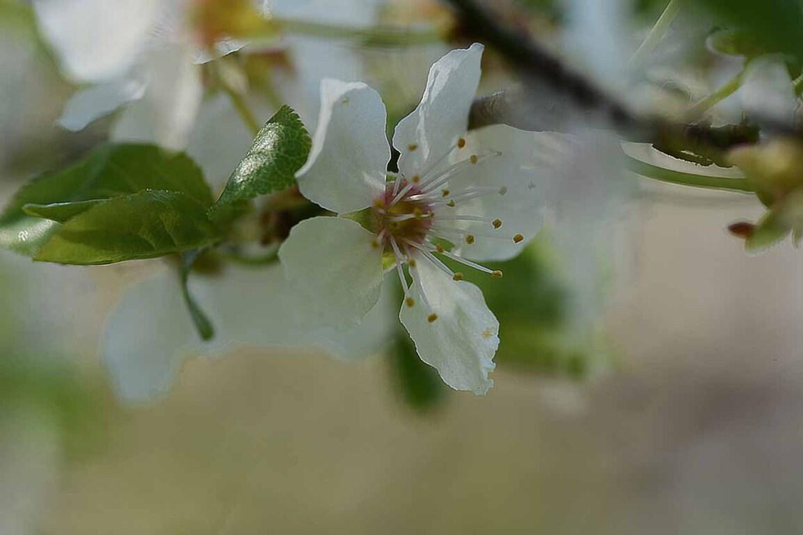 Vert printemps...