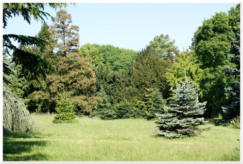 Arboretum de l'Ecole Du Breuil. Paris 12ème