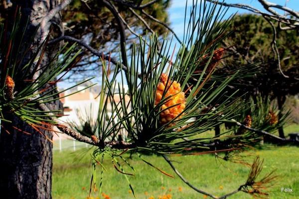 n04---Orange.JPG
