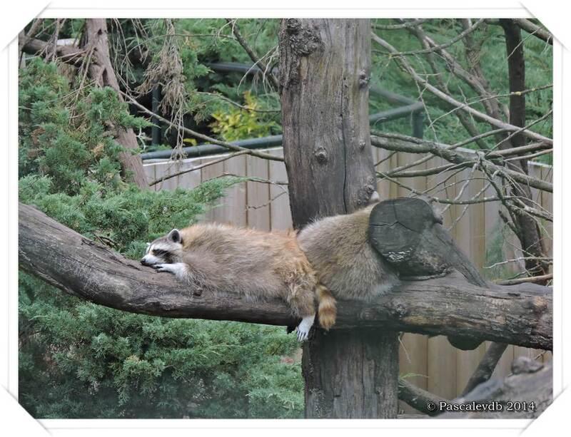 Zoo du Bassin d'Arcachon à La Teste de Buch - 11/20