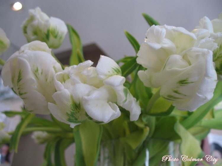 Des fleurs chez le coiffeur 37