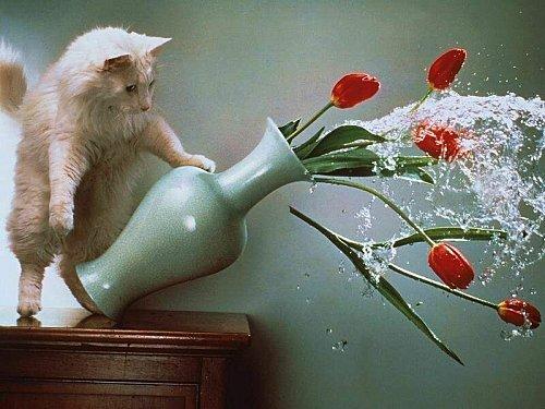 Chat-blanc.jpg