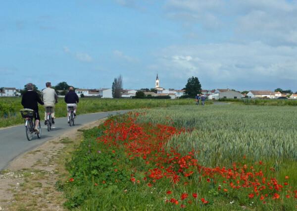 La Couarde - coquelicots clocher et vélos