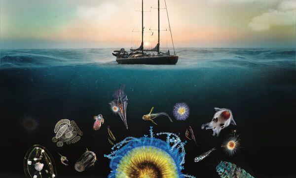 En deux voyages autour de la planète, les expéditions Tara Oceans et Tara Polar Circle ont recueilli une énorme quantité de données sur le plancton marin, micro-organismes compris. Christian Sardet, qui nous affirmait que cette récolte recélait « un trésor » et qu'elle « servirait encore dans un siècle », n'avait pas tort... © G. Bouneaud, Christian Sardet