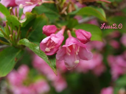 Dans mon jardin #3