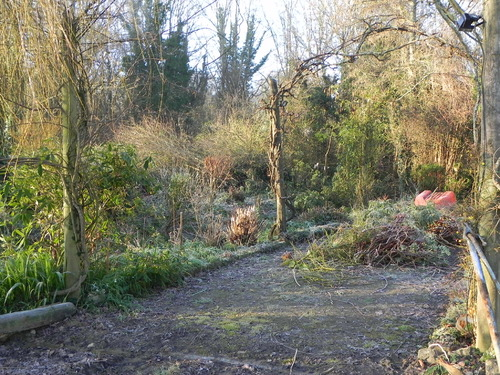 Au jardin Hiver 2013